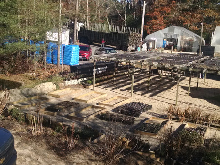 Sprout Farm Newsletter November 25, 2017   We hope you all had a very Happy Thanksgiving. We are hap