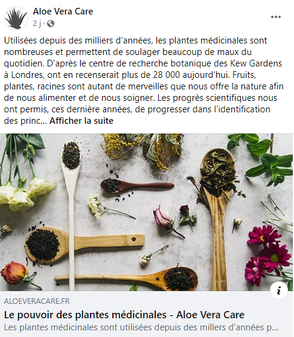 article-plantes.png