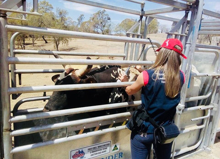 Take Advantage of the $150k Tax Incentive with Cattle Handling Equipment Built Tough for Queensland