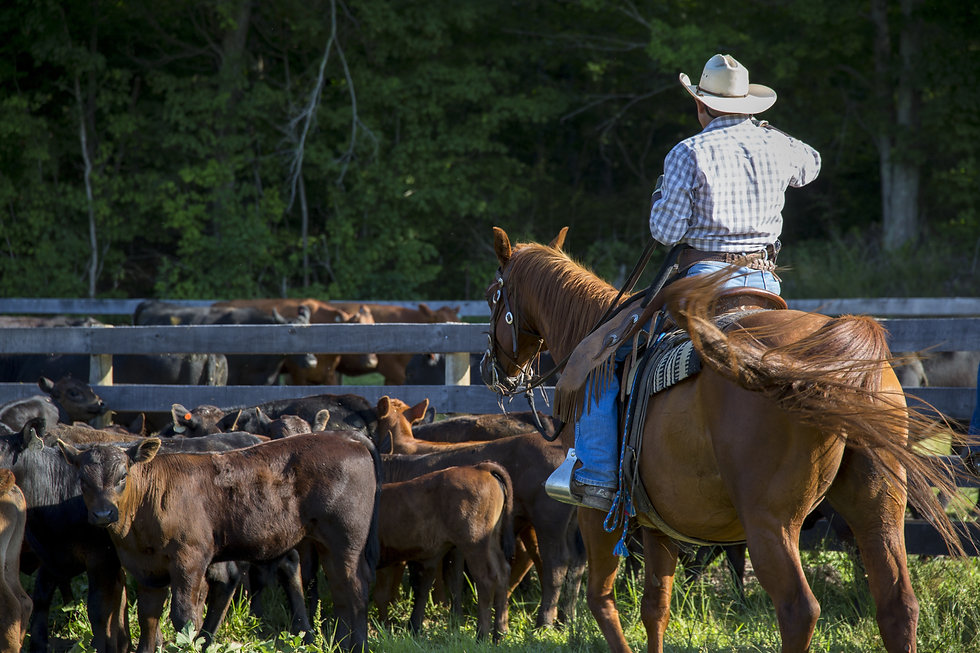 Cowboy in western wear on a horse using