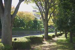 県立大学前の道路