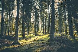 adventure-atmosphere-conifer-conifers-41