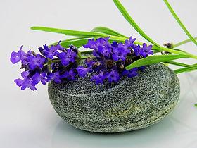 lavender-1573026_1920.jpg