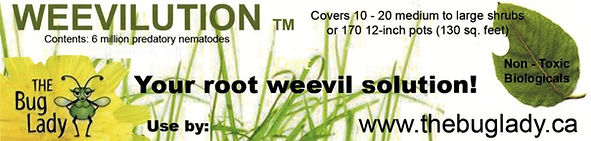 weevilutino good label.jpg
