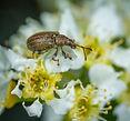 antenna-bee-beetle-1096281.jpg