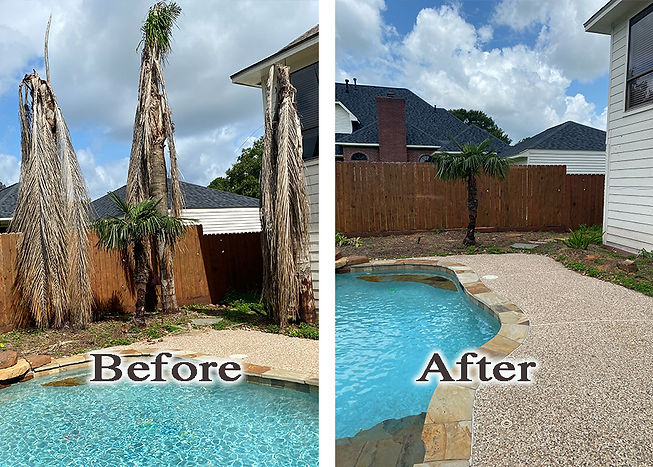 palm tree removal 2.jpg