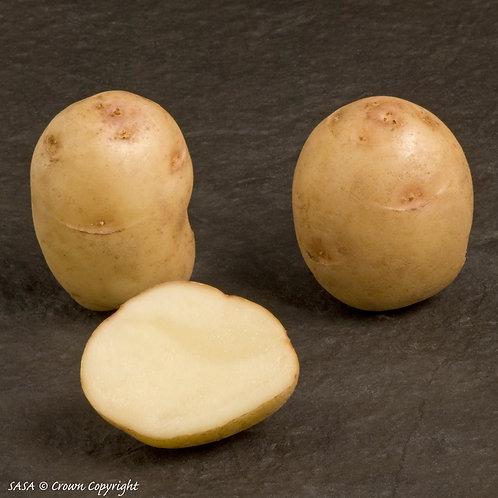 British Queen Seed Potato