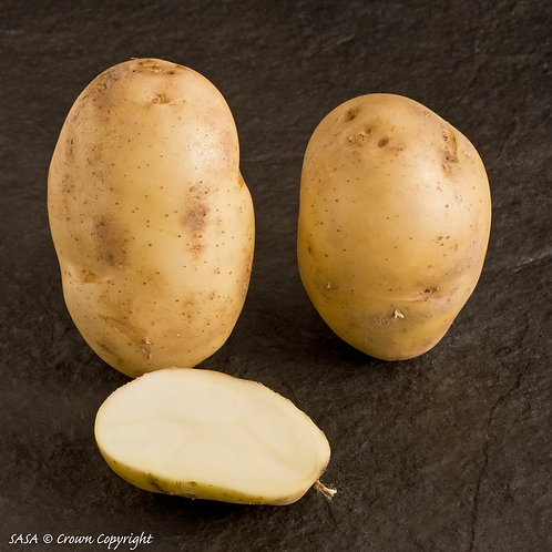 International Kidney Seed Potato