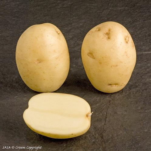 Maris Peer Seed Potato