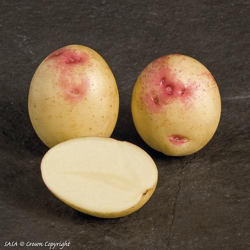 Bonnie Seed Potato