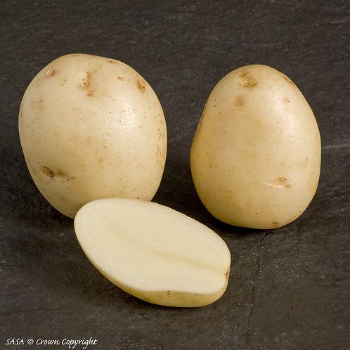 Swift Seed Potato