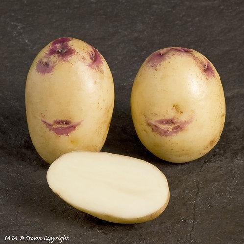 Kestrel Seed Potato