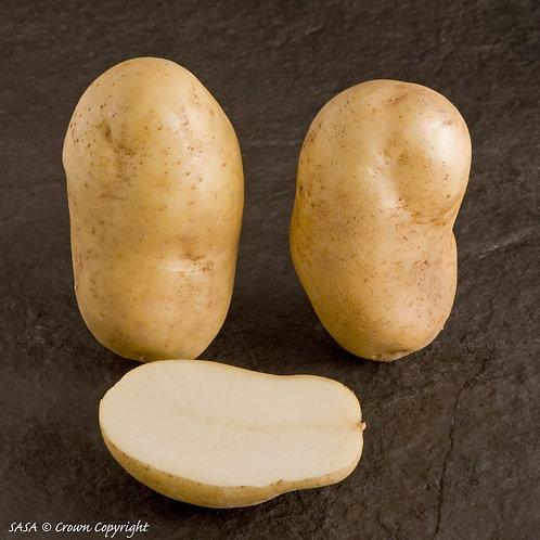 Pentland Crown Seed Potato
