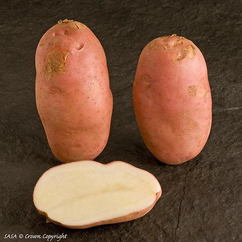 Organic Sarpo Mira Seed Potato