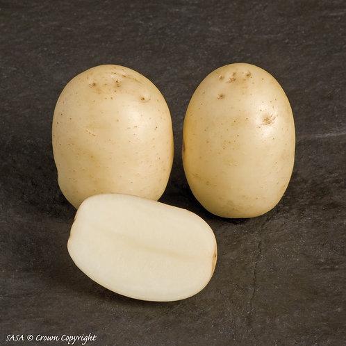 Nadine Seed Potato
