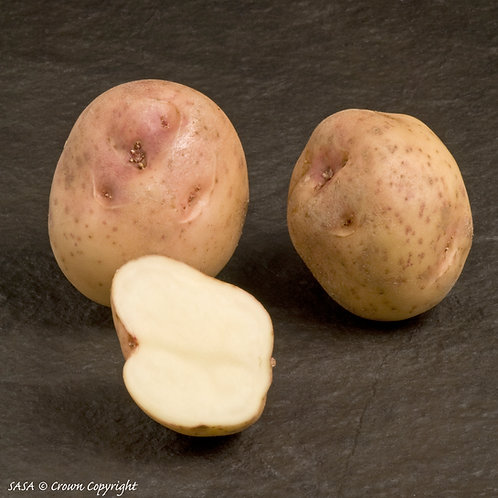 Kerrs Pink Seed Potato