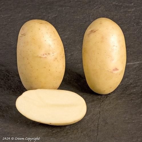 Pentland Dell Seed Potato