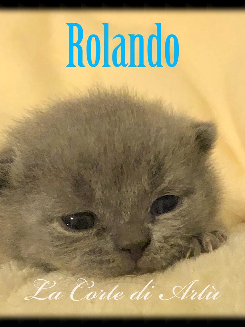 Rolando.JPEG