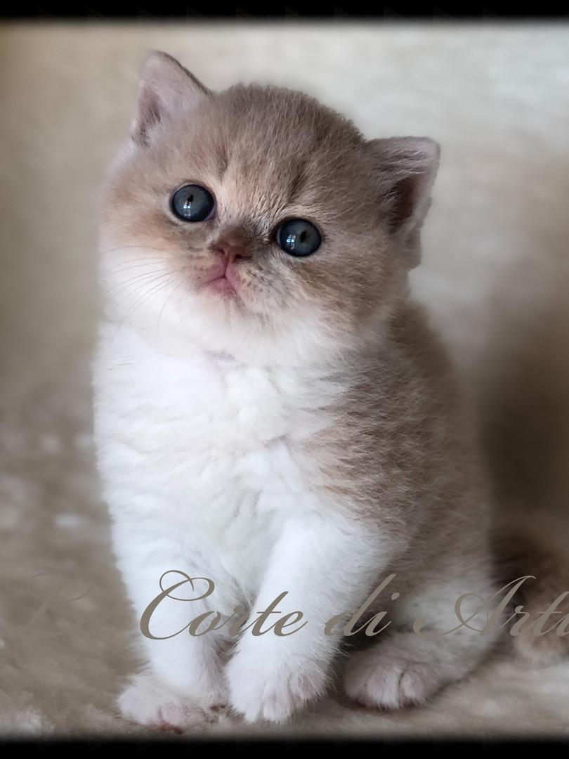 zar - maschietto bianco/crema