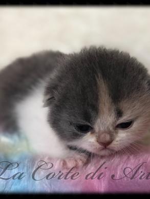 Femminuccia tricolore 2 settimane
