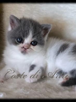 Z... - femminuccia bianca/blu arlecchina - 5 settimane