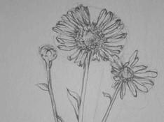 Detailtekening van een bloem in potlood