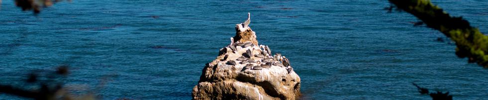 Point Lobos Island