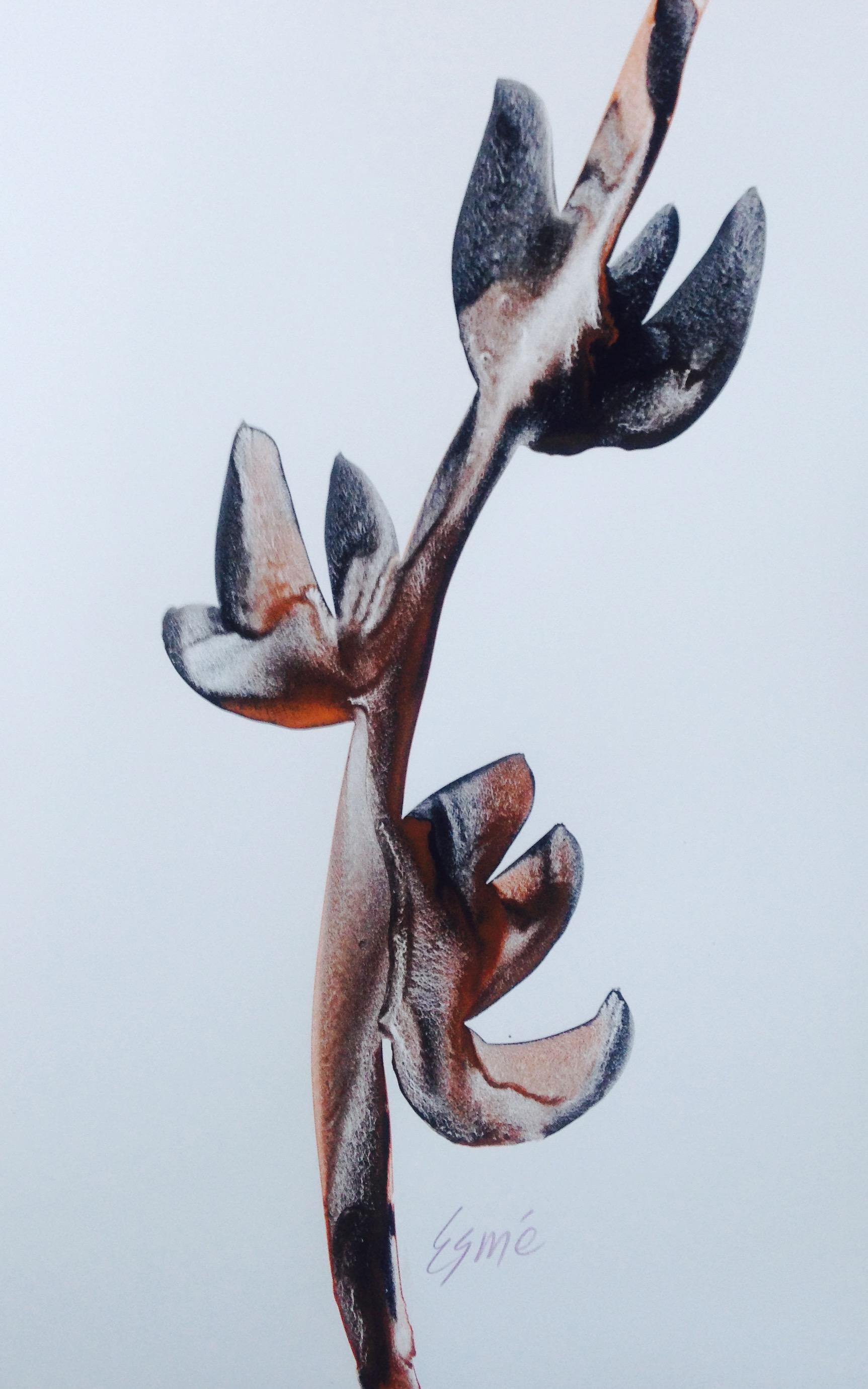 Seed Pod 1