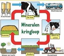 Mineralen kringloop