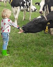 Tong van de koe voelen