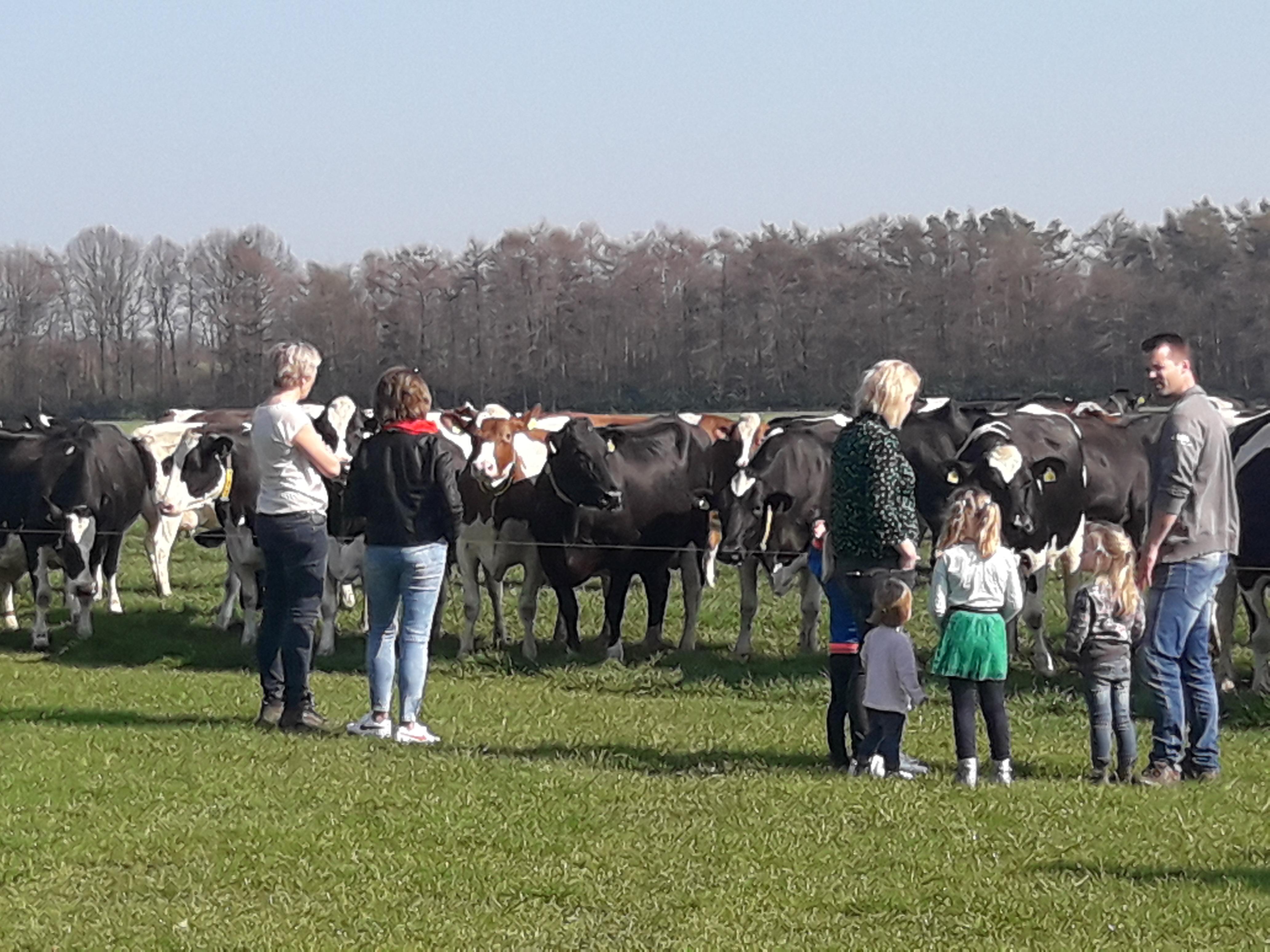 Koeien naar buiten opendag
