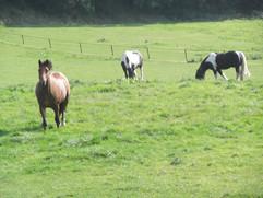 Happy Horses!