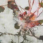 akira inumaru botaniqueA7225_edited_edit