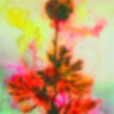 akira inumaru botaniqueA7683.jpg