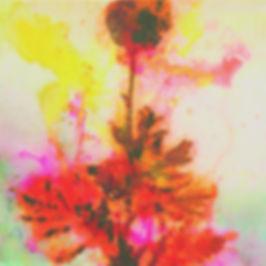 akira inumaru botaniqueA7683_edited.jpg