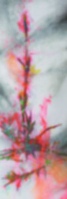 akira inumaru botaniqueA7614_edited.jpg