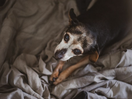 EVERYTHING YOU NEED TO KNOW ABOUT LOVING A SENIOR DOG