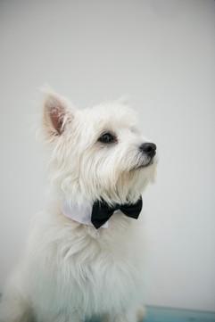 My Harry to Cheekiest Dog in the World