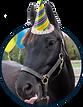 pony rides, Pony party, pony rental
