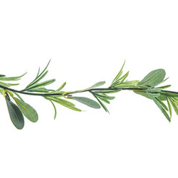 Olive Leaves & Rosemary Garland