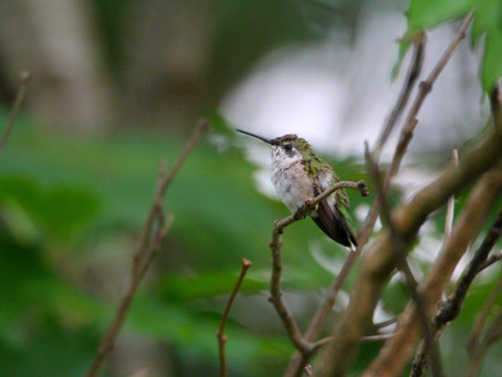 Perspective and the Hummingbird