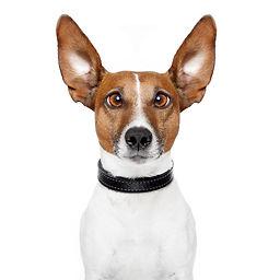 """דלקת אוזניים בכלבים - ד""""ר לירון"""