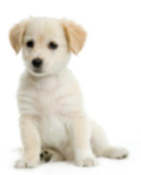 גור כלבים לירון אשל ספיר