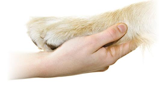 המתת חסד לכלב בבית
