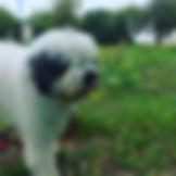 """עוזי הכלב של ד""""ר לירון ספיר"""