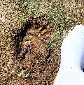 熊の足跡.JPG