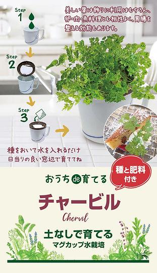 ハーブ野菜_マグカップ2021_チャービル修正1215-01.jpg