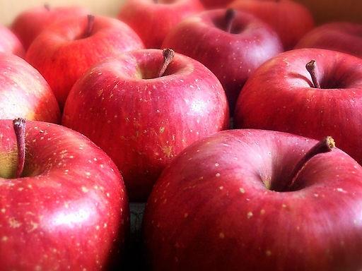 青森りんごの予約販売を開始しました