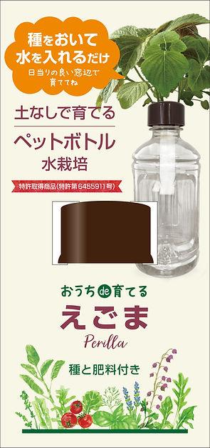 ペットボトル水栽培_えごま_伝農アシスト.jpg