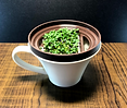 おうちde育てるシリーズ「マグカップ水栽培・スプラウト」の取り扱いをはじめました